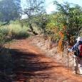 Relato. Maria Bedin Trento trata sobre esta rota de peregrinação, em meio a uma fascinante natureza, seguindo as setas amarelas, indicativas do caminho, atravessando povoados, plantações, vilas, rios bosques.